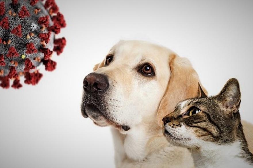 Reportan cuadros graves en perros y gatos por la variante británica del SARS-CoV-2 - Vet Market
